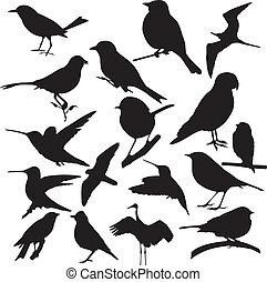 oiseau, vecteur