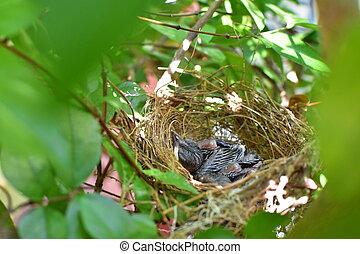 oiseaux, attente, pour, les, mère, alimenter