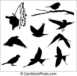oiseaux, chanson