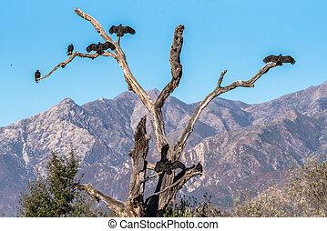 oiseaux, grand, sun., trempage, matin, groupe
