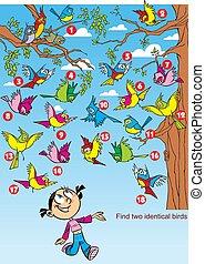oiseaux, identique, deux, image, trouver