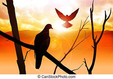oiseaux, levers de soleil