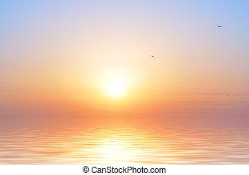 oiseaux, levers de soleil, océan