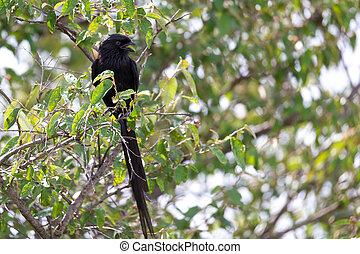 oiseaux, local, arbre diverge, kenyan, asseoir, couleurs, coloré