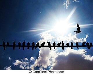 oiseaux, silhouette