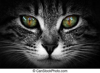 ojos, de, gata