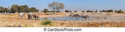 Okaukeujo waterhole panorama 2