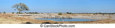 Okaukeujo waterhole panorama 3