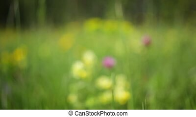 okolica, kwiaty
