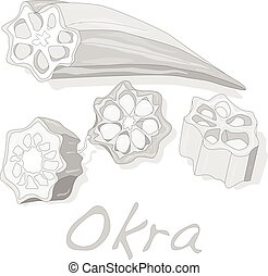 Okra plant vector illustration isolated