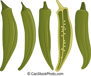 Okra. Vector Illustration - Vector Illustration of whole and...