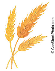 Oktoberfest spikelets of wheat golden yellow. Hand drawn watercolor painting on white background clip art graphic elements for creative design and printable decor.
