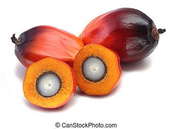 olaj pálma, gyümölcs