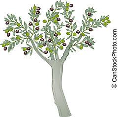 olajbogyó fa