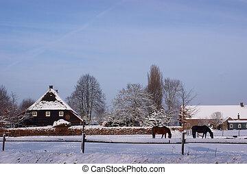 olandese, fattoria