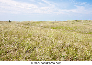 olandese, paesaggio, duna, costa