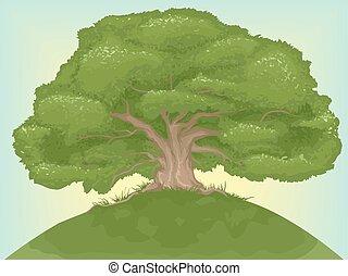 olbrzym, drzewo