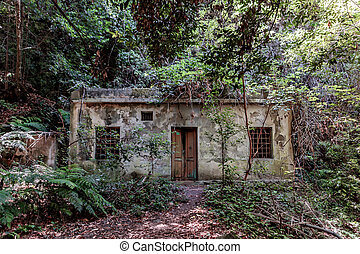 daytime view Abandoned old house in the forest