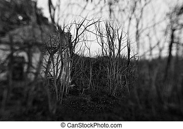Old abandoned house in the woods and blurry trees. Black and white.