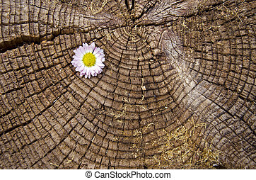 old aged wooden background with flower