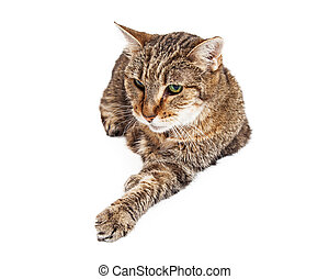 Old and Tired Tabby Cat Laying - A senior tabby cat laying...