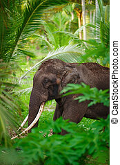 Old asian elephant in the forest