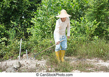 Old Asian farmer cleaning land.