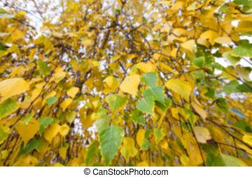 old autumn foliage