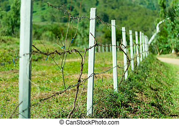 Old barb wire fence with grass in field
