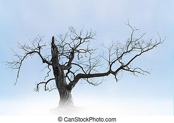 Old bare tree