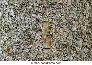 Old Bark Tree texture background, Brown Tree trunk