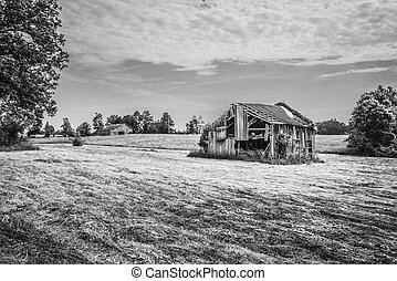 Old Barn in a Hayfield