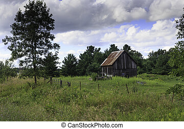 Old barn in the forest
