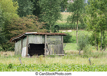 Old barn in the meadow