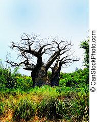 Old Barren Tree