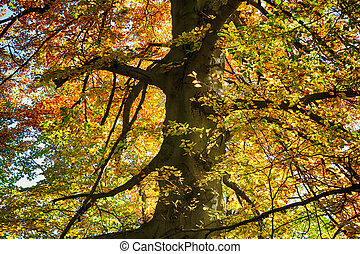 old beech tree as nice natural background