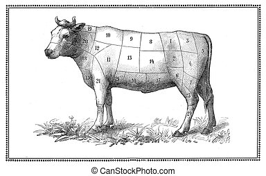 "An old beef chart with numbered cuts. My elaboration from an engravings of ""Sueddeutsche Kueche"" by Katharina Prato - Verlagbuchhandlung Styria, 1913, author unidentified."