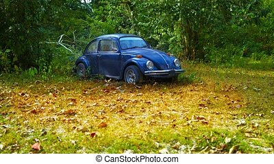 3840x2160 video - Cute beetle car, with its curved edges and styling, parked and apparently abandoned in the high grass amongst the trees.