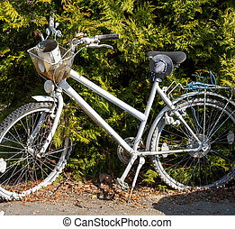 old bicycle in front of a hedge