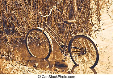 Old bicycle in the reed