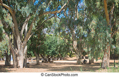 Old big green trees in the park.
