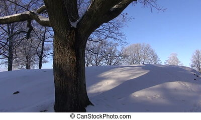 old big oak trunk in winter on snow
