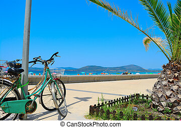 old bikes and small palm tree by the sea
