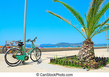 old bikes and small palm tree by the sea in Alghero
