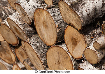 Old birch logs closeup.