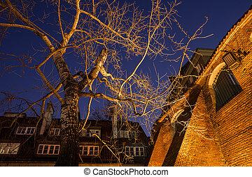 Old Birch Tree Illuminated at Night