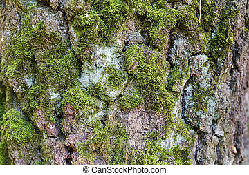 Old birch trunk with cracked and moss-grown bark, background
