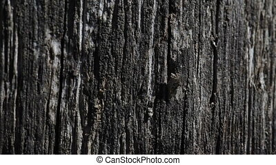 Old black wooden texture background