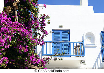 Old blue window on a white building with beautiful bougainvillea flowers