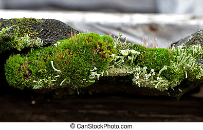 Old boards overgrown with green moss